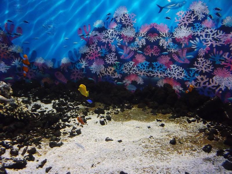 Aquarium Valparaiso