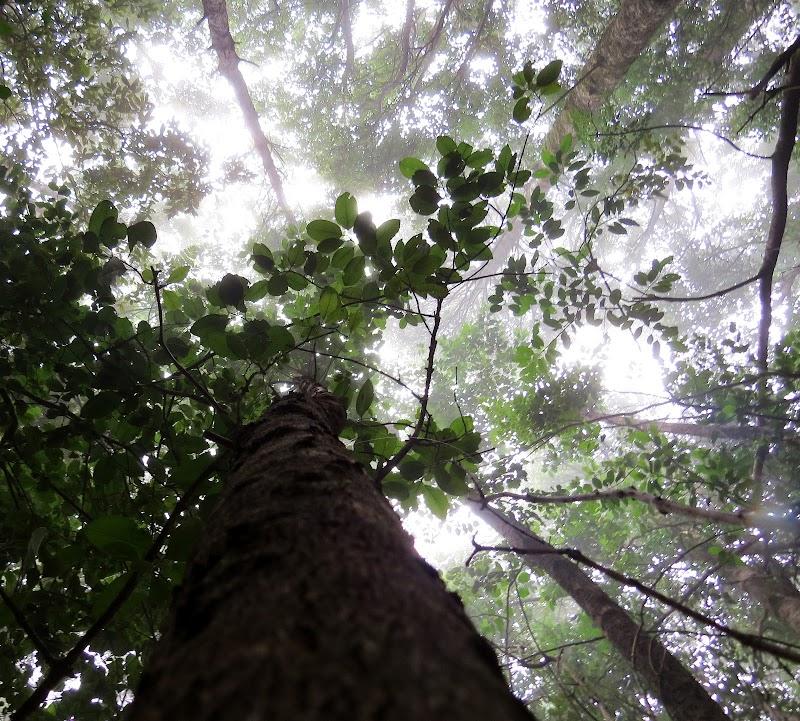 Los Queules National Reserve