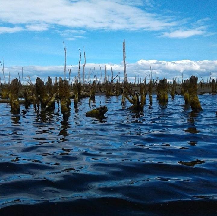 Reserva Ecologica Chepu
